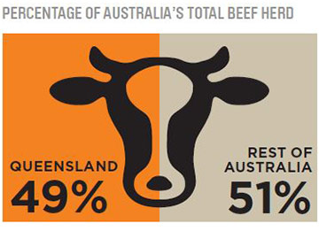 Beef in Queensland